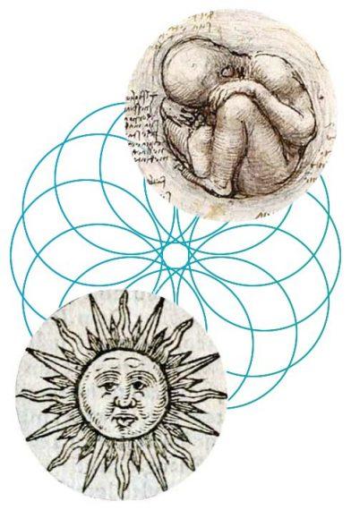 elipse-imagen-terapia-floral-evolutiva